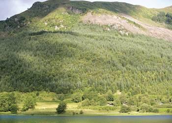 Strathyre Forest